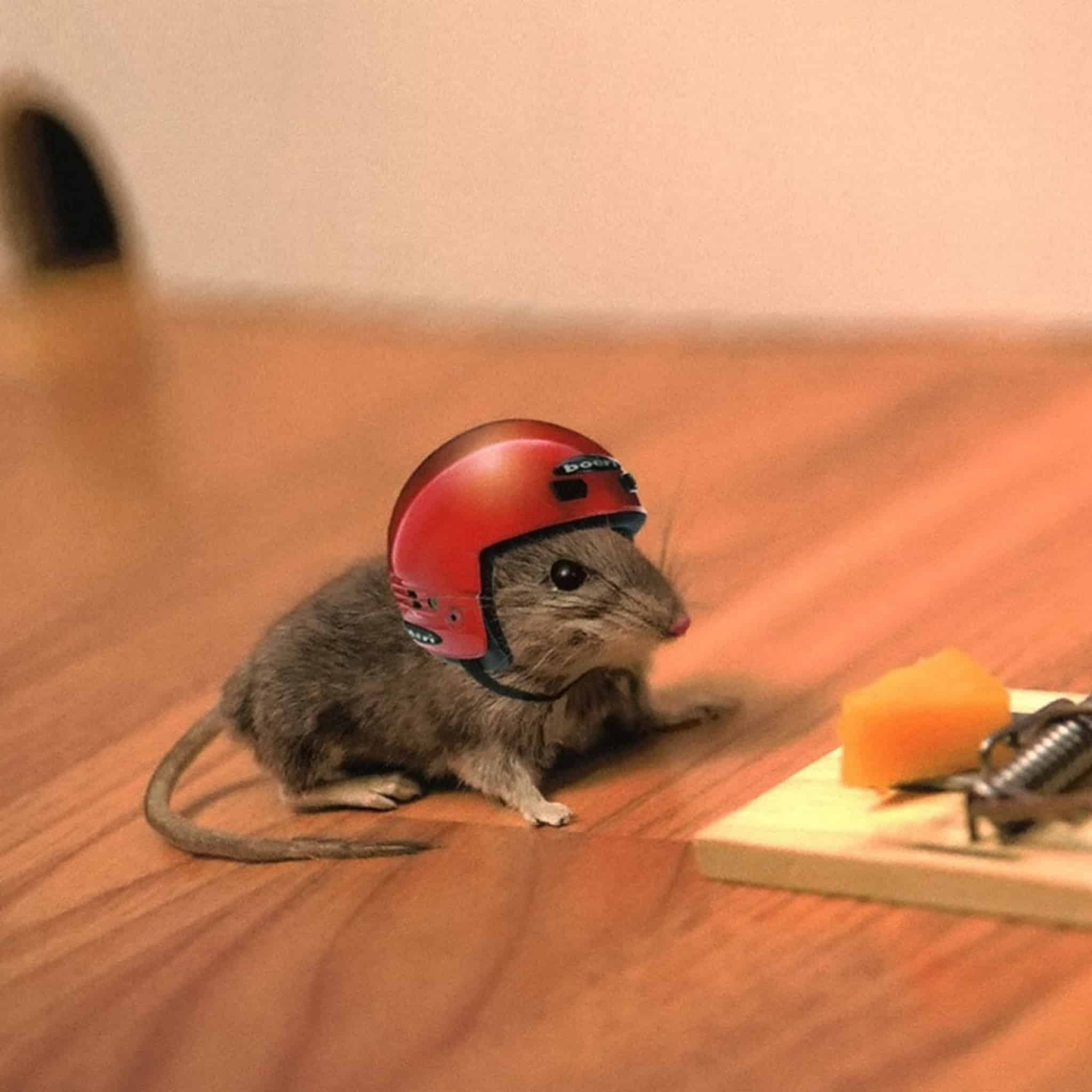 are mice smart enough to avoid traps