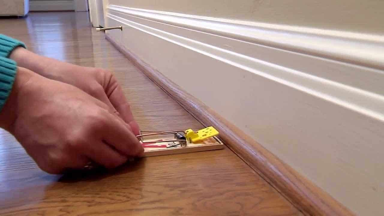 How To Set A Mouse Trap (Without Losing