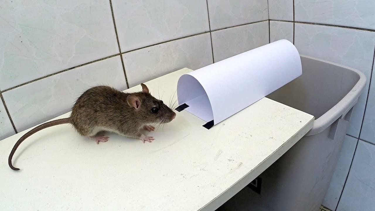 Catch a Mouse Without a Mouse Trap