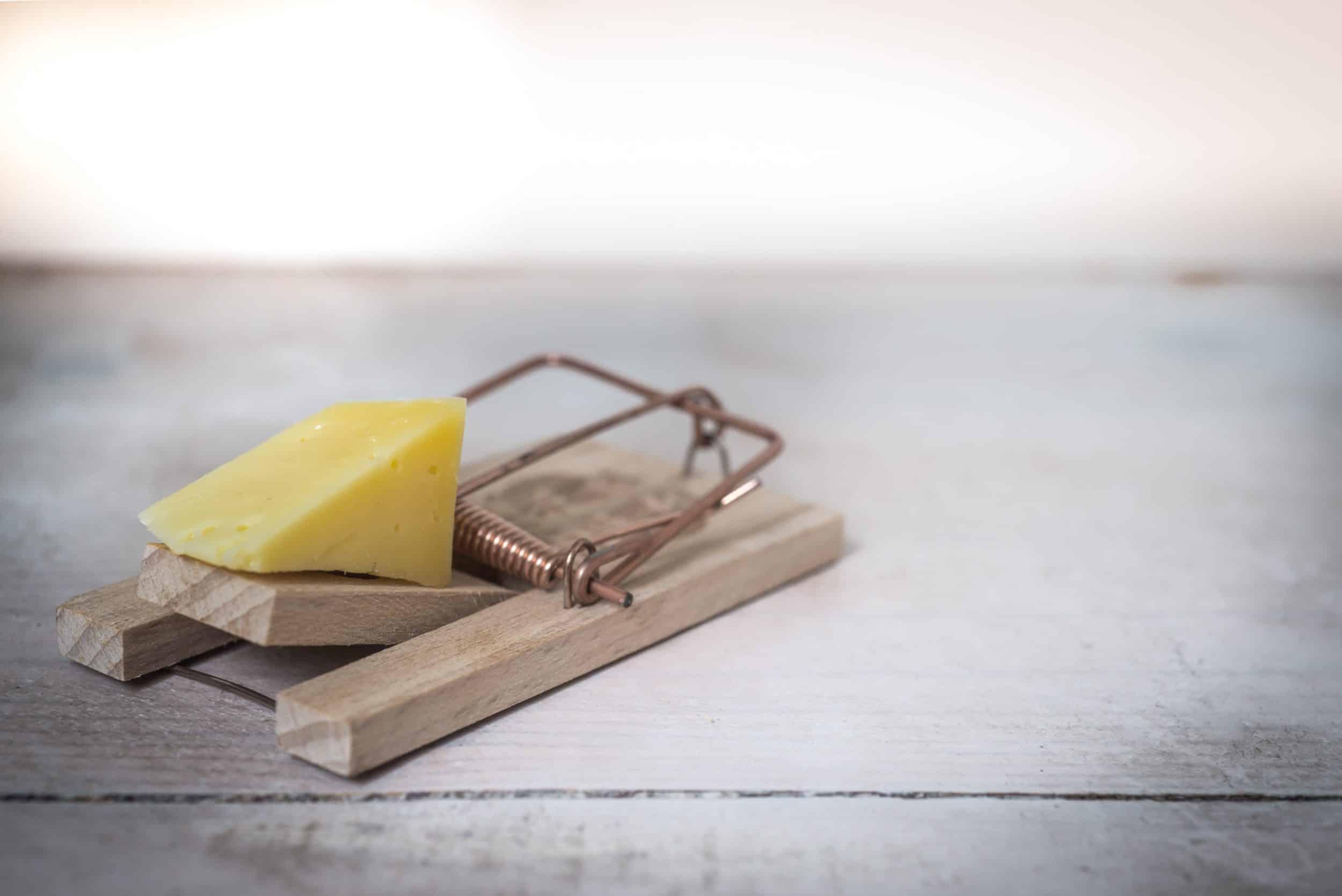 reuse mousetrap